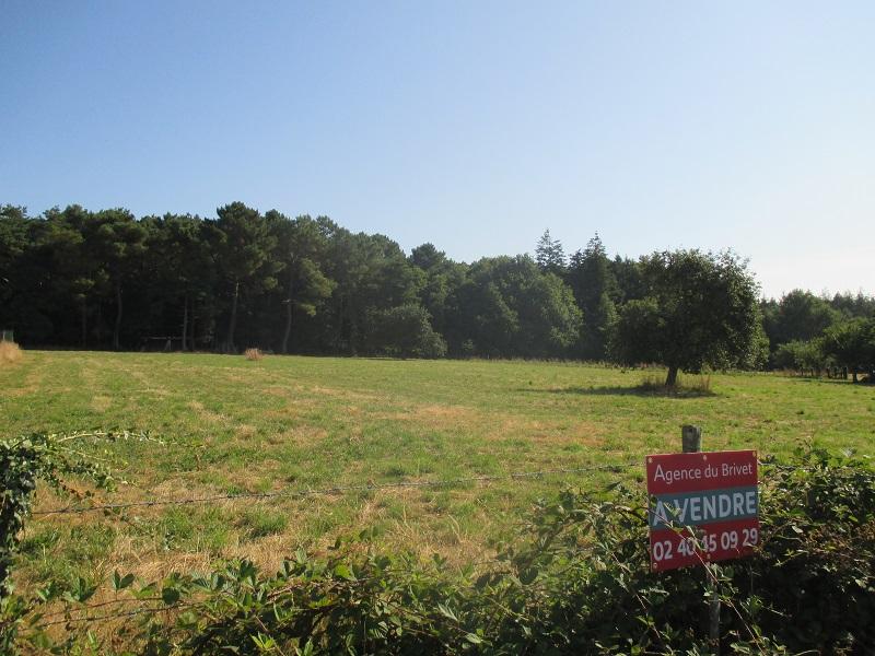 Terrain de 1425 m2 avec possibilité d'1 hectare de terre attenante.